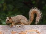 squirrel_1_bg_20090620